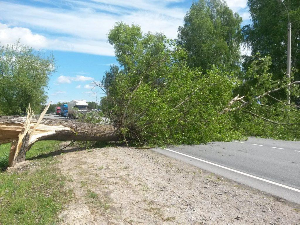 дерево упало на дорогу
